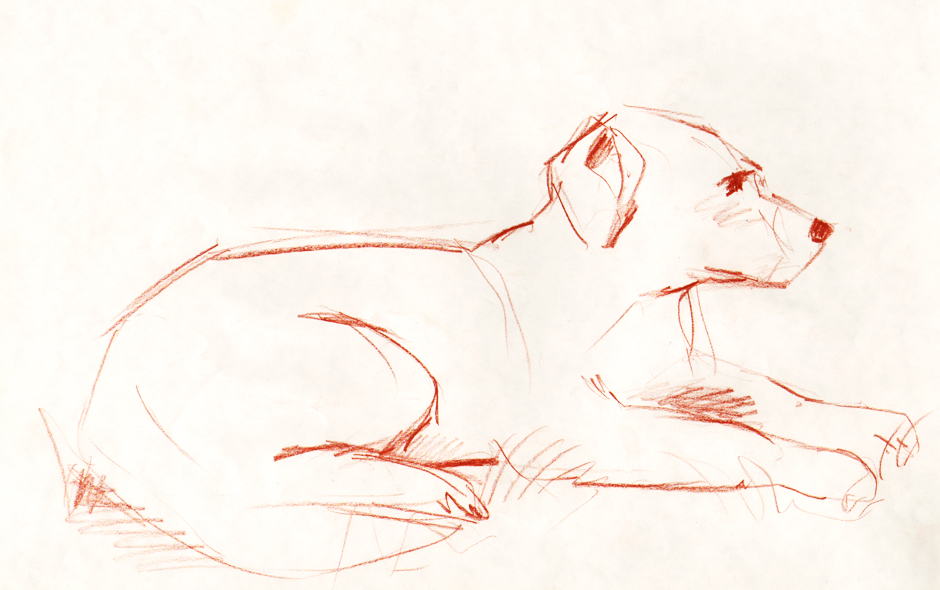 Sketches of animals - dog